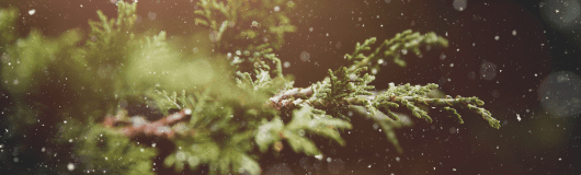 CyberSense-Holiday-Image-Pine-Tree